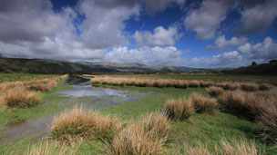 RSPB Ynys-hir Nature Reserve Poys, Mid-Wales