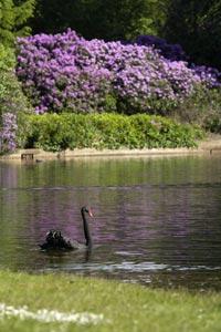 Claremont Landscape Garden Esher Surrey National Trust