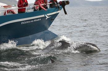 Dophin Watching Dulra Nature Tours County Mayo Ireland