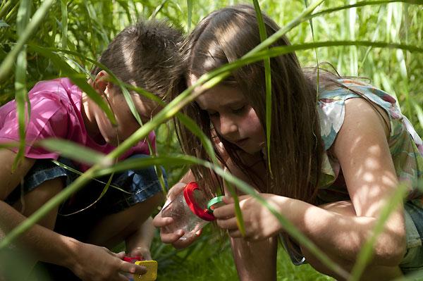 Kids Bug Hunt National Trust Sheffield Park East Sussex