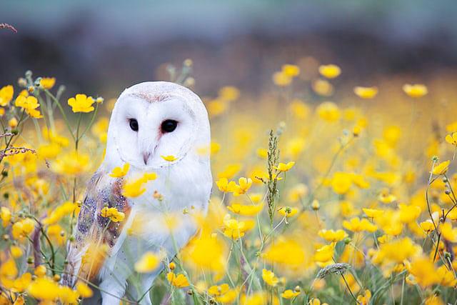 Spot a barn owl at Woodhuish, Devon