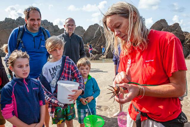 National Trust Beach Ranger with Crab, Woolacombe, Devon