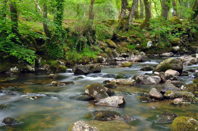 The picturesque River Plym and surrounding woodland, Devon