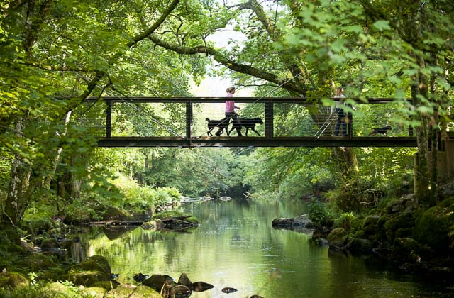 Visitors crossing a footbridge over the River Teign with their dogs in Dartmoor National Park, Devon